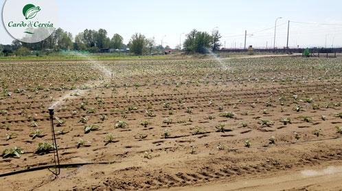 irrigazione cardodicervia.it