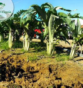 manutenzione-sepoltura-vendita-cardodicervia-it-7